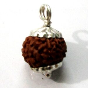 Nine Face Rudraksha (java)