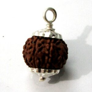 Eight Face Rudraksha (java)