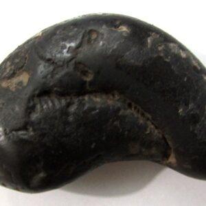 Rare Auspicious Matshya Murti Shaligram