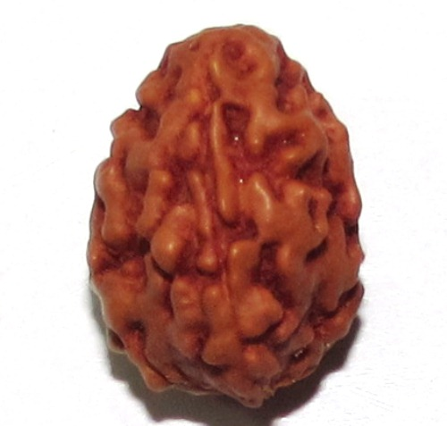 Three Face Rudraksha   ( Java )